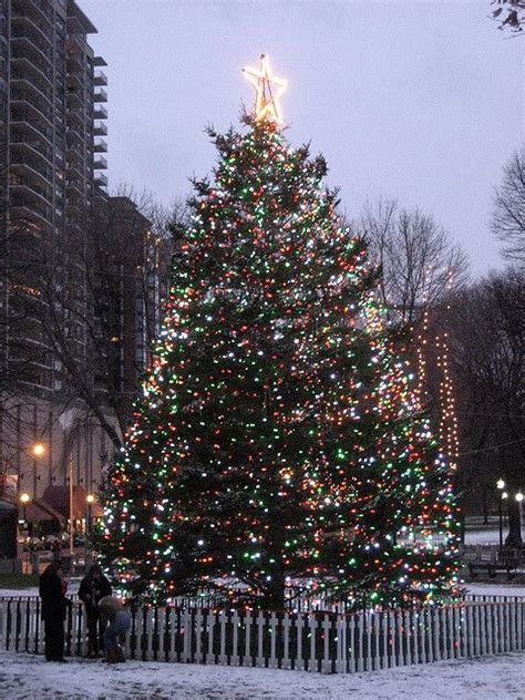 boston common christmas tree christmas lights 2 pinterest