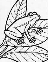 Frog Coloring Printable Template Amphibian Templates Animal Tree Preschoolers Popular Coloringpages101 Bestcoloringpagesforkids Coloringhome 2b18 Tattoodaze sketch template