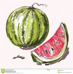 Vector Hand Drawing Realistic Watermelon Stock ...