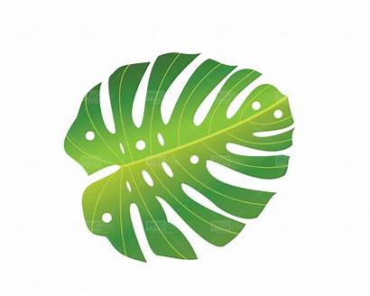 Tropical Leave Pngfile