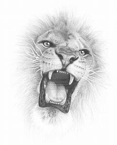Lion Face Pencil Drawing