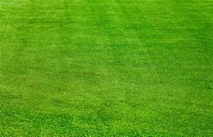 Green grass background free stock photos download (15,655 ...