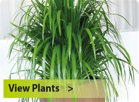 desk plants that don t need sunlight office plants that don t need sunlight 5 office plants