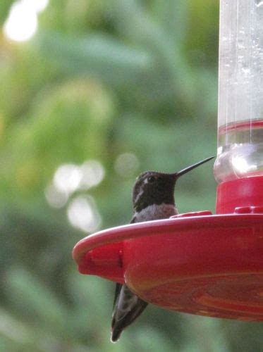 tips on winter feeding for hummingbirds birds and blooms