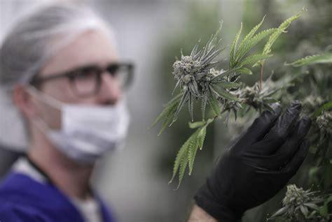 l 233 galisation de la marijuana quel devrait 234 tre l 226 ge l 233 gal pour fumer acadie nouvelle