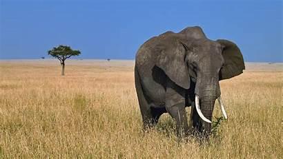 Wild Wallpapers Elephant Animals Animal Desktop Backgrounds