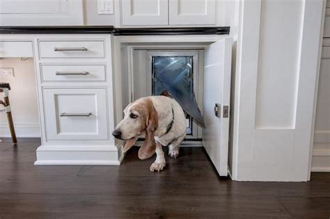 9 Creative Ways to Disguise Pet Supplies as Decor in Your