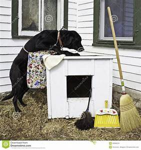 house cleaning dog cleaning house With dog cleaning house