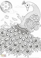 Peacock Coloring Hard Sheets Printable Easy Template Templates sketch template