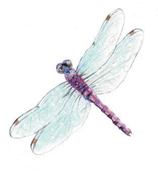 morris dragonfly  yellow jacket  mercury news