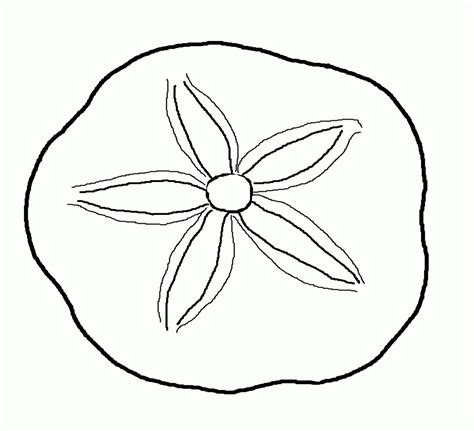coloring pages  seashells coloring home