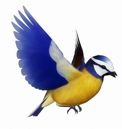 Bird Birds Clip Clipart Flying Tit Colourful