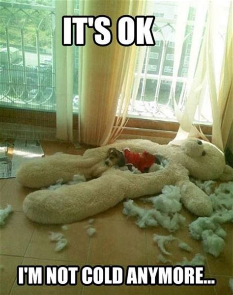 Animal In Bed Meme - 271 best animal meme s images on pinterest animals dog fluffy pets and funny animals