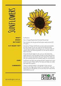 Sunflowers Planting Guide