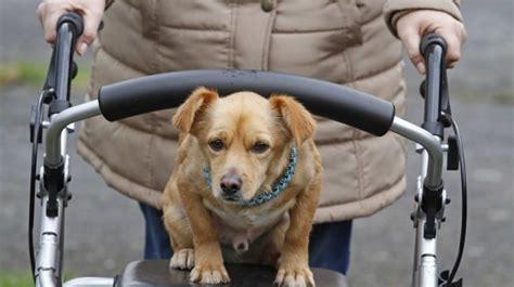 lsg blindenhund funktioniert auch mit rollator