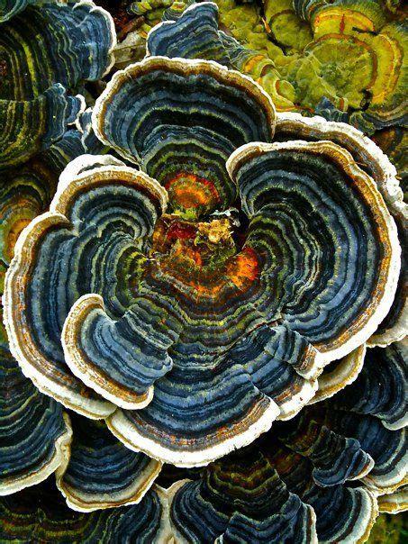 Best Geometric Patterns Nature Images Pinterest