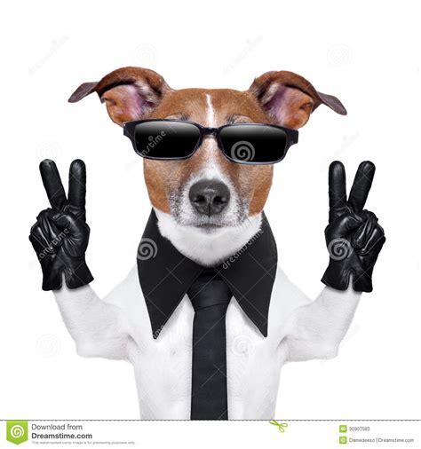cool dog stock  image