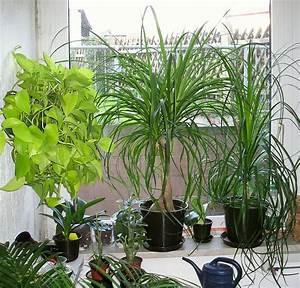 Wohnung Feng Shui : pflanzen begutachten ~ Markanthonyermac.com Haus und Dekorationen