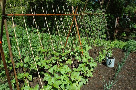 vegetable garden trellis small vegetable garden space savers harvest to table