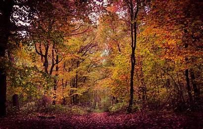 Woodland Foliage Autumn Telegram вконтакте