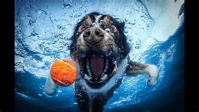Underwater Dogs Balls Chasing