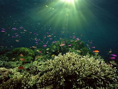 Underwater Sea Wallpapers Ocean Under Water Undersea