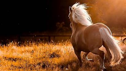 Horses Wild Wallpapers Backgrounds Zone