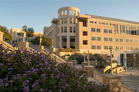 california state university san marcos blueberry college