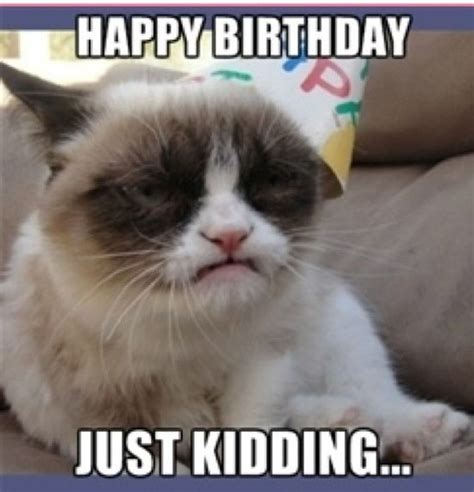19th Birthday Meme - 56 best images about grumpy cat birthday on pinterest
