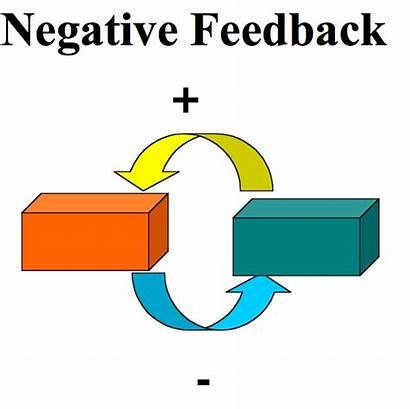 Feedback Negative Biology System Mechanisms Wikimedia Attacks