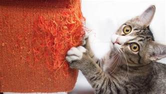 cat separation anxiety how to reduce separation anxiety in cats cattime