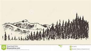 Hand Drawn Landscape Fir Forest And Meadow Sketch Stock ...