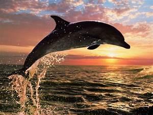 Schöne Delfin Bilder : s e delfin bilder s e delfinbild und foto tier bilder ~ Frokenaadalensverden.com Haus und Dekorationen