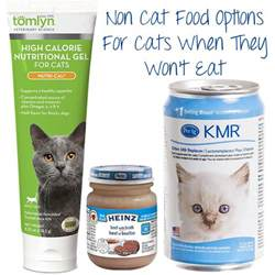 high calorie cat food getting your cat to eat non cat food options