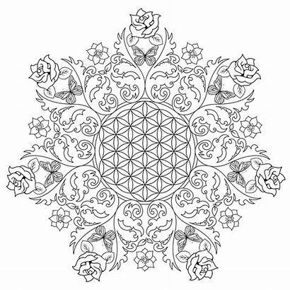 Coloring Flower Pages Adults Complex