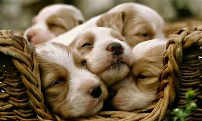 Puppy Wallpapers 1080p Dogs Background Definition Animals