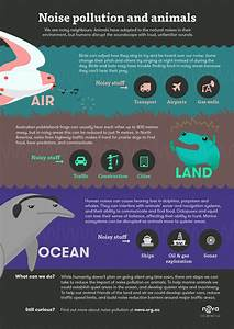 Infographic: Noise pollution and animals