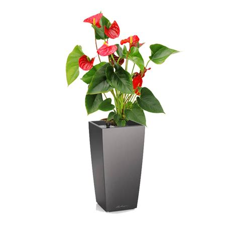 meuble cuisine plantes fleuries artifils inspirations et plante fleurie