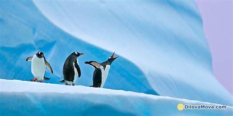 den vidkrittya antarktidi rotsi ekologichnomu kalendari sichnya