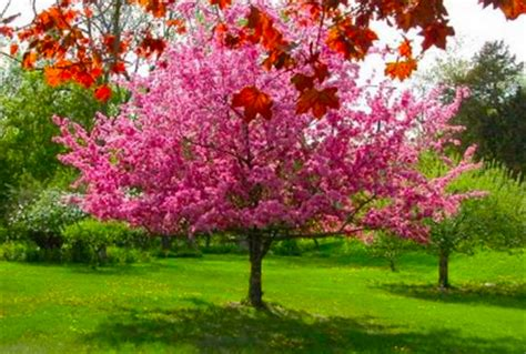 small landscape trees back yard landscaping ideas