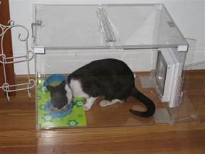 cat feeding station proof cat feeding station breeds picture