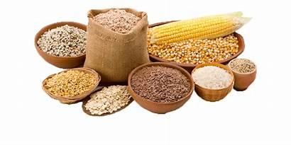 Grains Whole Nutrition Foods Vegetables Volume Fruits