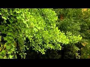 Die Farben Des Herbstes : die farben des herbstes sonntag 17 november 2013 youtube ~ Lizthompson.info Haus und Dekorationen