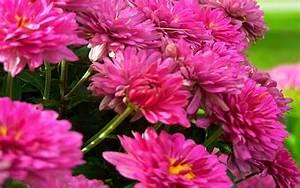 May Flowers Wallpaper - WallpaperSafari