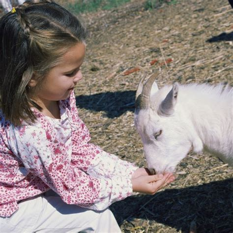 petting exotic florida animals zoos zoo farm features usa getty goats typical