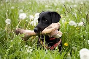 Give A Dog A Bone  But Make Sure It U0026 39 S Safe First