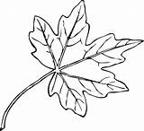 Leaf Maple Coloring Paperbark Leaves Drawing Canada Pages Canadian Field Template Drawings Flowers Different Sketch Getdrawings sketch template