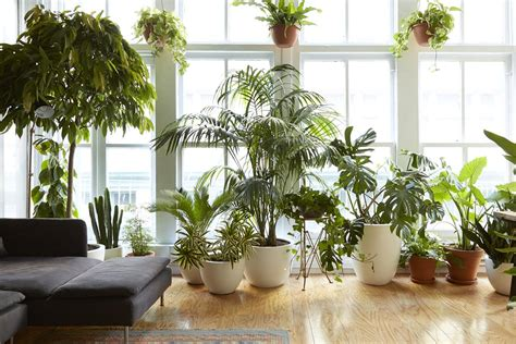 jenis jenis tanaman indoor penyelamat ruangan rooangcom
