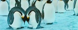 Penguin Love GIF - Find & Share on GIPHY