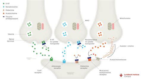 mechanism  action  tricyclic antidepressants tcas
